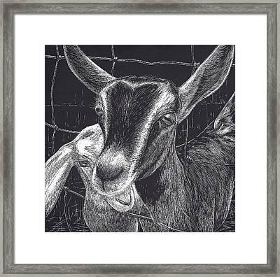 Slow Turtle Farm Goats Framed Print by Jennifer Harper