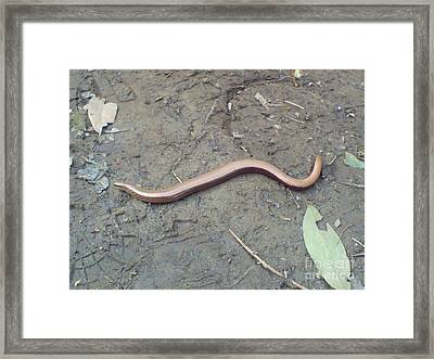 Framed Print featuring the photograph Slow Worm by John Williams