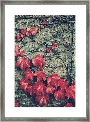 Slowly Dying Framed Print by Laurie Search