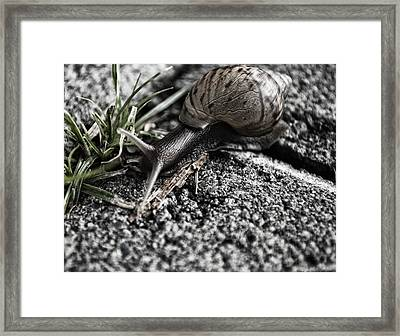 Slowly Finding My Way Framed Print by Miguel Winterpacht