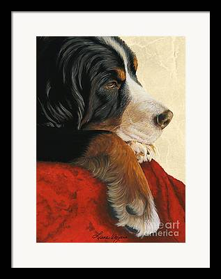 Bernese Mountain Dog Framed Prints