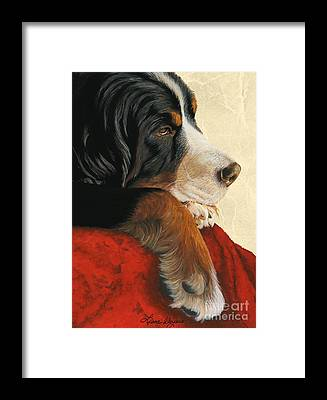 Bernese Mountain Dog Framed Prints