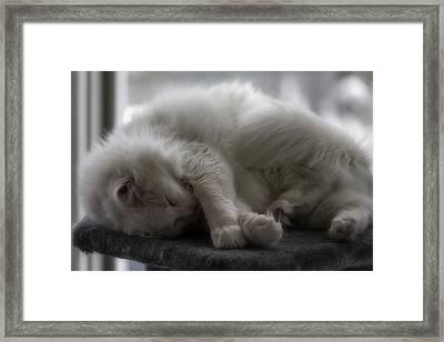 Slumbering Framed Print by Lynn Palmer