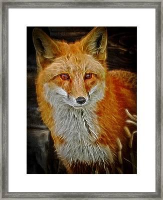 Sly Fox 2 Framed Print
