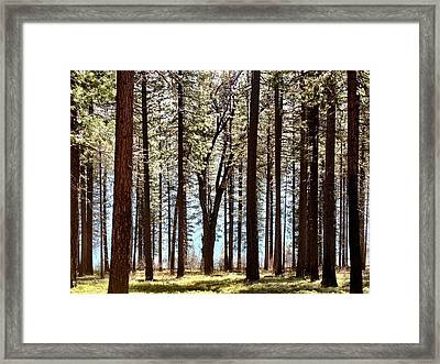 Sly Park Framed Print by Sherry Flaker