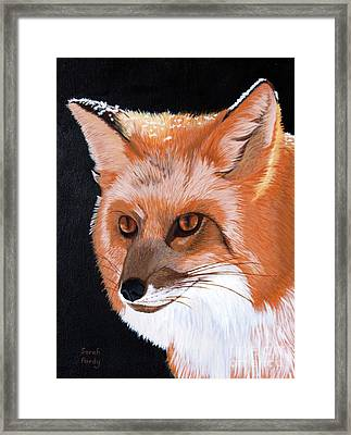 Sly Red Fox Framed Print