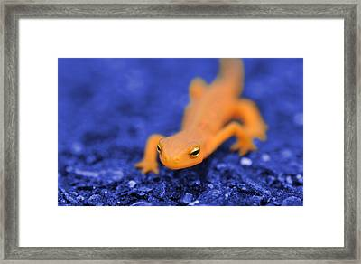 Sly Salamander Framed Print by Luke Moore