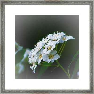 Small Beauty Framed Print