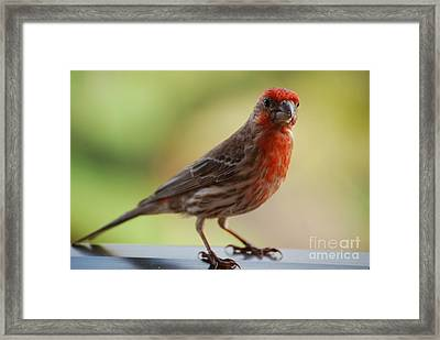Small Brown And Red Bird Framed Print by DejaVu Designs