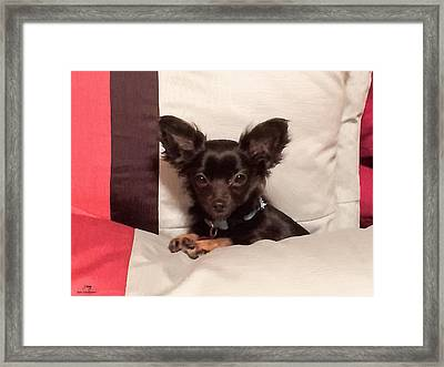 Small But Mighty Framed Print by Donna Kirby