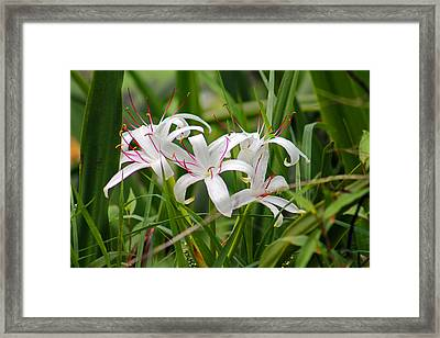 Small Details Framed Print