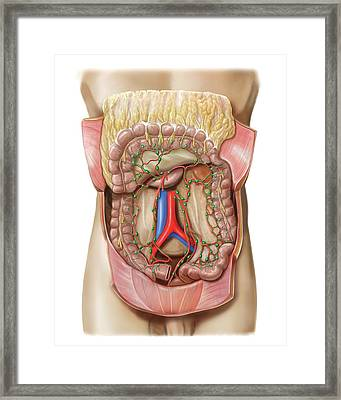 Small Intestine Lymphoid System Framed Print by Asklepios Medical Atlas