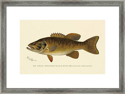 Small Mouthed Black Bass Framed Print by Gary Grayson