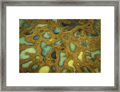 Small Ponds With Lava And Moss, Iceland Framed Print by Arctic-images