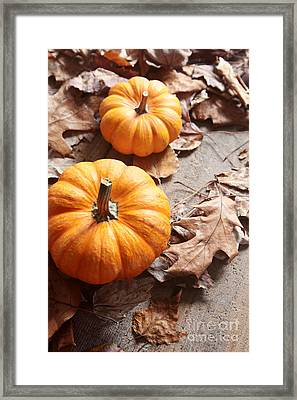 Framed Print featuring the photograph Small Pumpkins On Fall Leaves by Sandra Cunningham