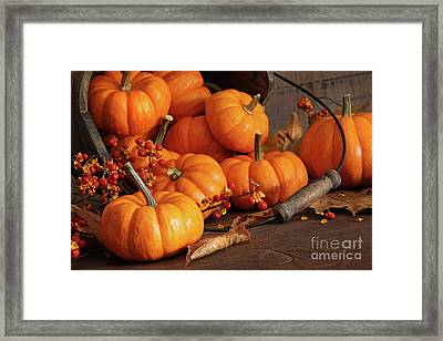 Small Pumpkins With Wood Bucket  Framed Print by Sandra Cunningham