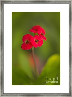 Small Red Flowers With Blurry Background Framed Print