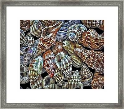 Small Sea Shell Collection Framed Print by Walt Foegelle