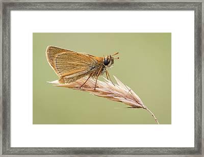 Small Skipper Framed Print by Heath Mcdonald