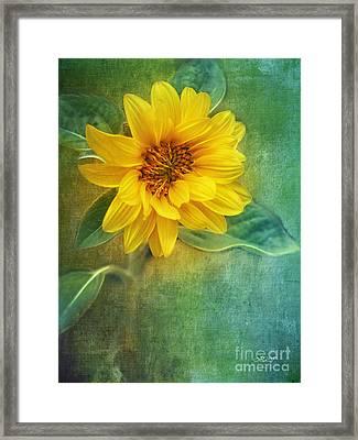 Small Sunflower Framed Print