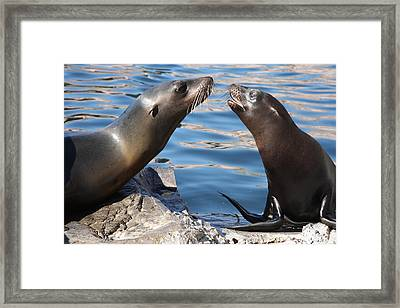 Small Talk Framed Print by Christiane Schulze Art And Photography