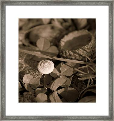 Framed Print featuring the photograph Small Things Matter by Candice Trimble