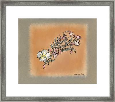 Small Wild Primrose Framed Print by Dawn Senior-Trask