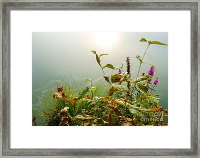 Small Wonders Of Life Framed Print