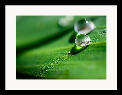 Canna Photographs Framed Prints