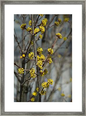 Small Yellow Flowers Framed Print by Priyanka Ravi