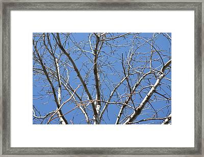 Smallest Branches Framed Print by Kiros Berhane