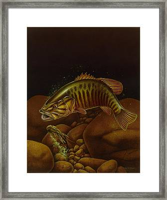 Smallmouth And Crawdad Framed Print by Jon Q Wright