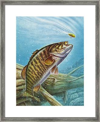 Smallmouth Bass Framed Print by JQ Licensing