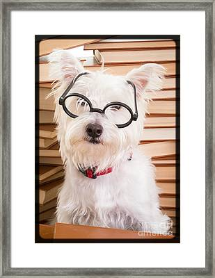 Smart Doggie Framed Print by Edward Fielding