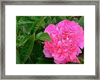 Smell Me Framed Print