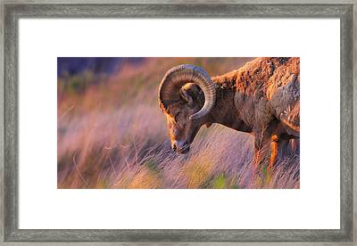 Smell The Wind Framed Print
