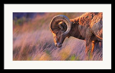 Bighorn Mountains Framed Prints