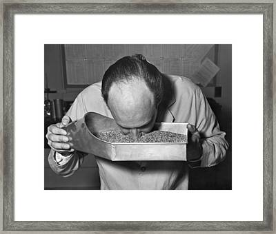 Smelling Grain Inspector Framed Print by Underwood Archives