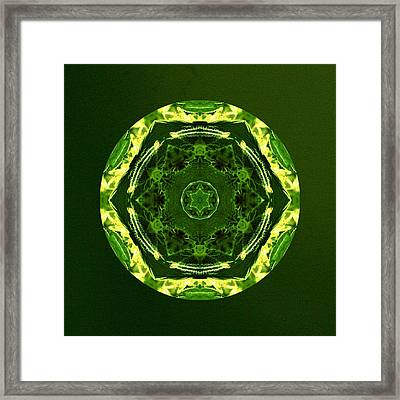 Smilabis Framed Print