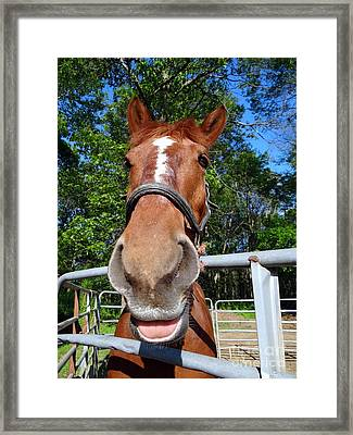 Framed Print featuring the photograph Smile by Ed Weidman