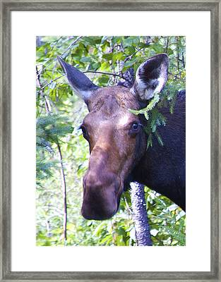 Smile For The Camera Framed Print