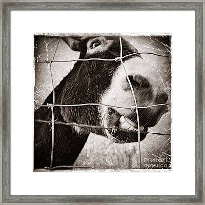 Smile Like You Mean It Framed Print by Trish Mistric