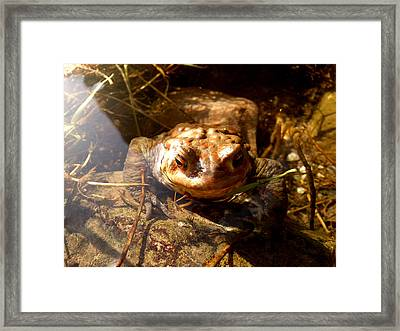 Framed Print featuring the photograph Smile by Lucy D