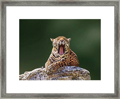 Smile Framed Print by Photo By Ivan Vukelic