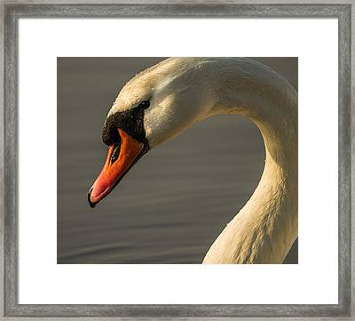 Framed Print featuring the photograph Smile With Your Heart by Rose-Maries Pictures
