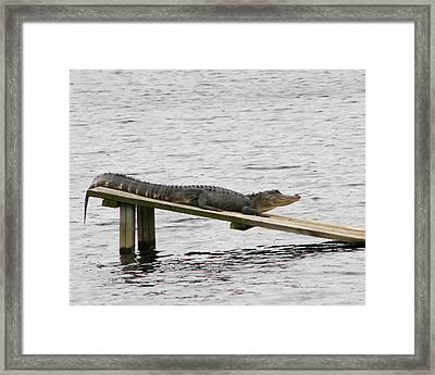 Framed Print featuring the photograph Smiley by Rhonda McDougall