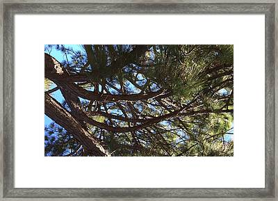Smiling Branches Framed Print