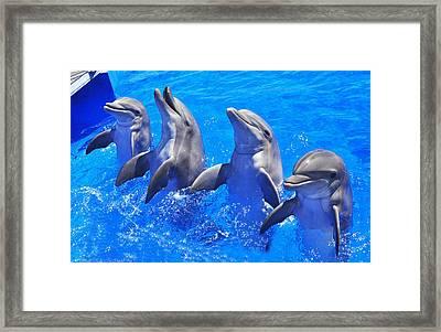 Smiling Dolphins Framed Print