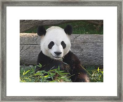 Smiling Giant Panda Framed Print