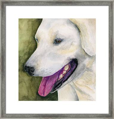 Smiling Lab Framed Print by Stephen Anderson